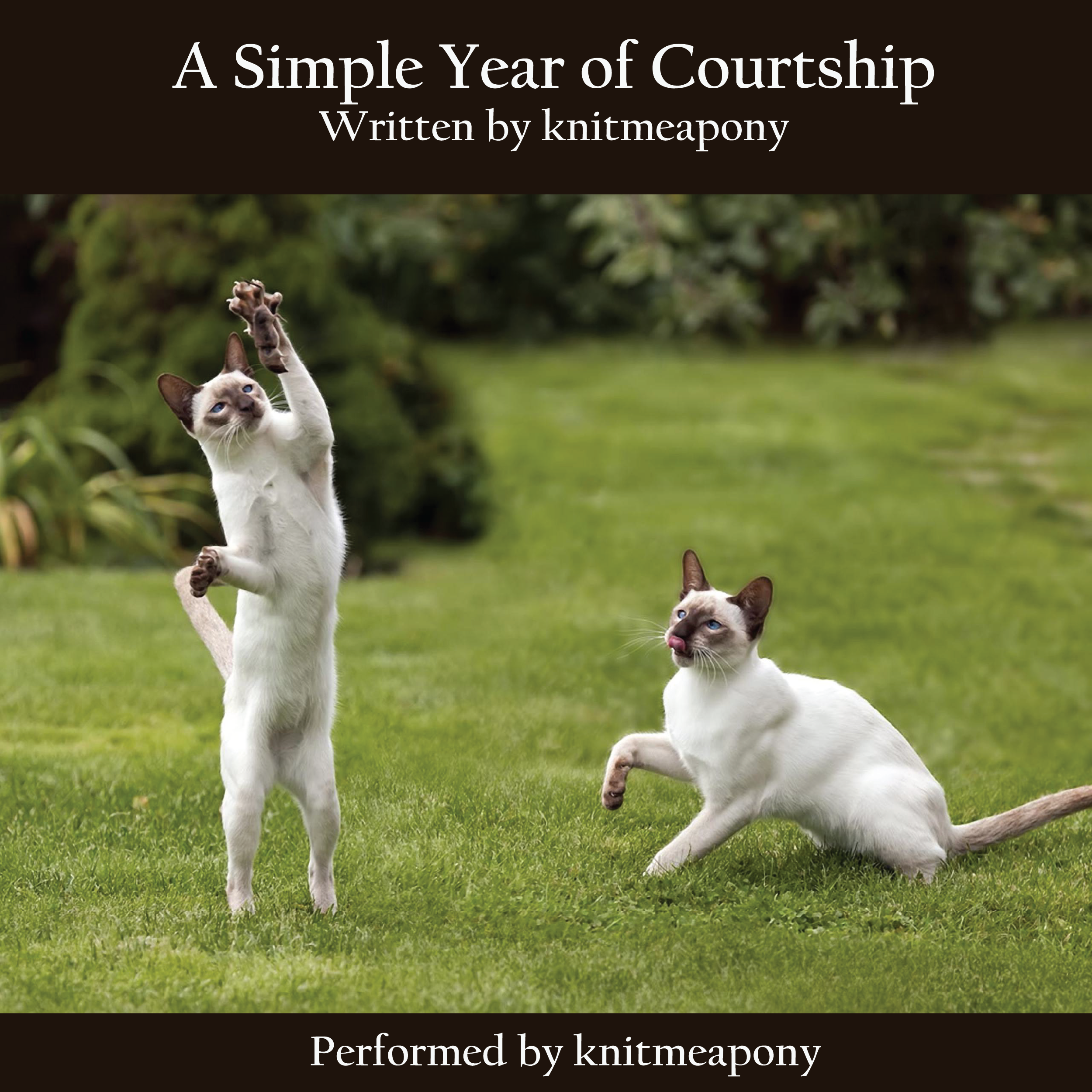 A Simple Year of Courtship Album Cover